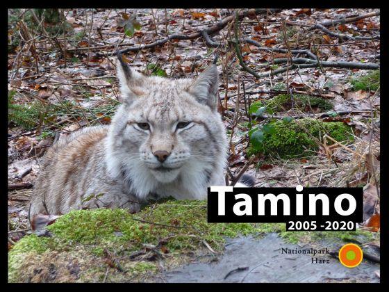Traurige Nachrichten aus dem Luchs-Gehege des Nationalparks Harz