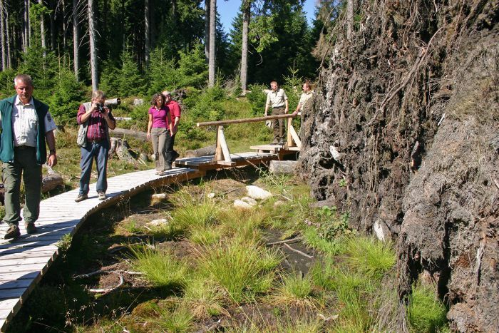 People looking at the roots of a spruce