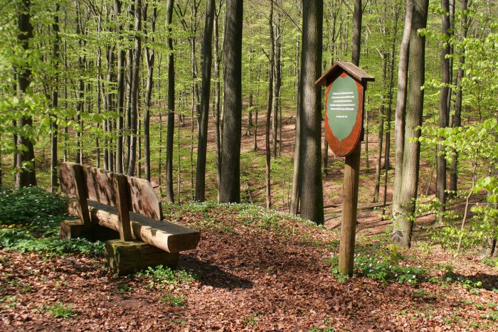 Wooden information panel and banquet in the forest